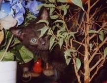 Baby Rima playing hide and seek