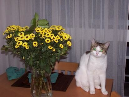 Some flowers from Nala