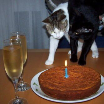 Rima and Nala want some champagne and cake