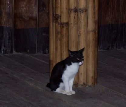 Batman cat in restaurant, Phi Phi island, Thailand