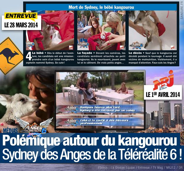 polemique-kangourou-sydney-anges-6.jpg