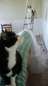 chats-travaux2.jpg