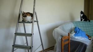 chats-travaux6.jpg