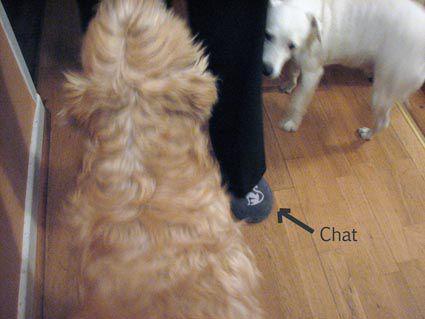 chiens et chat.jpg