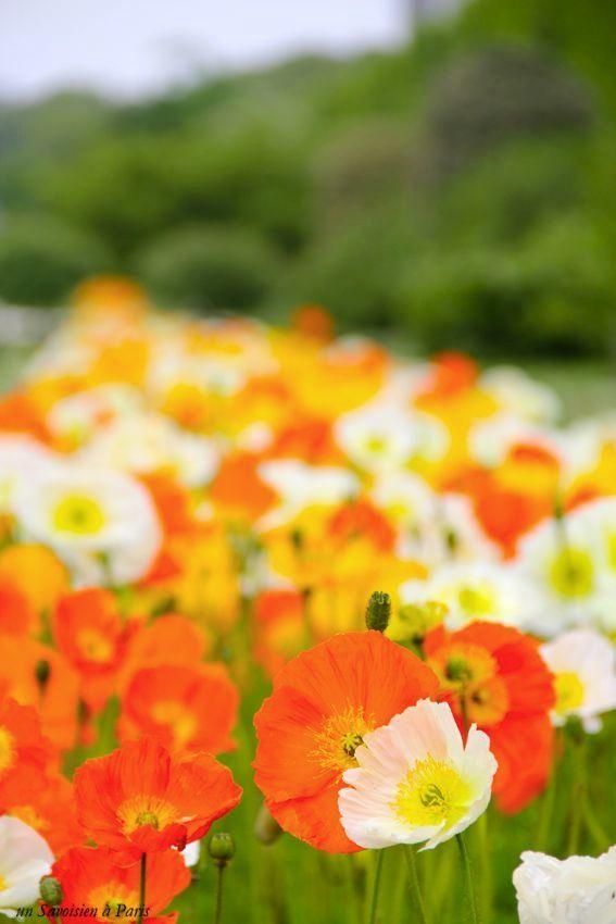 jardin-plantes-10
