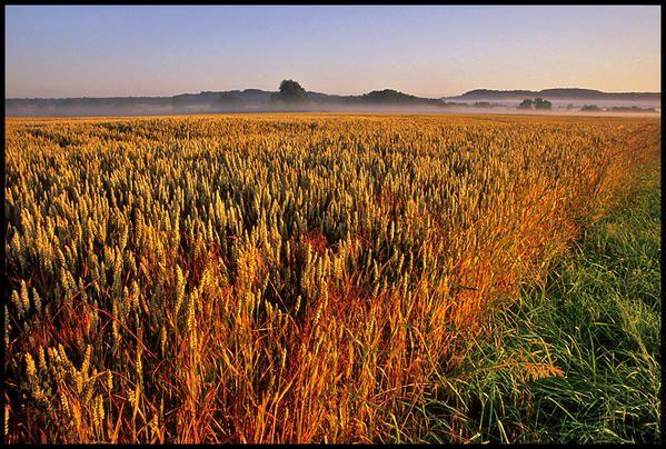 La Bourgogne, vue par Mike Long, copyright 2007. Avec son aimable autorisation