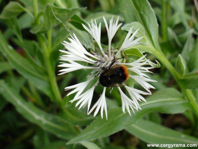 fleur bourdon