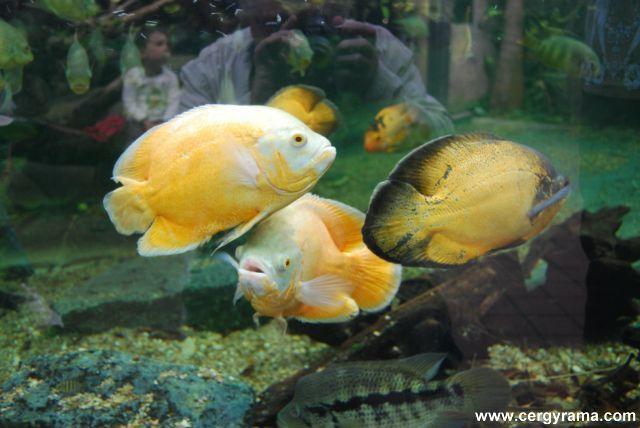 liquide poissons 04