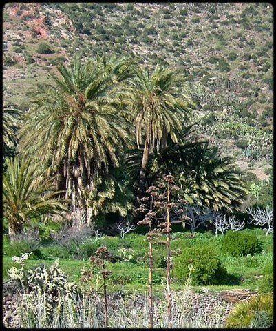 Oasis-Cabo-de-Gata