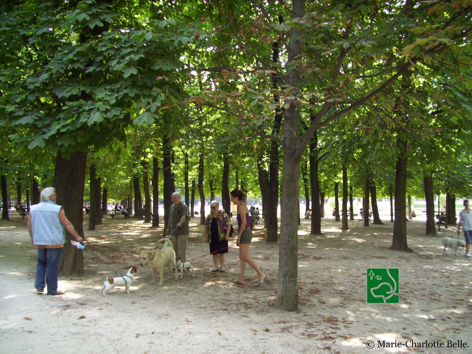 ou se promener au vert dans la ville lumiere 1er e city guide des chiens parisiens par spencer. Black Bedroom Furniture Sets. Home Design Ideas