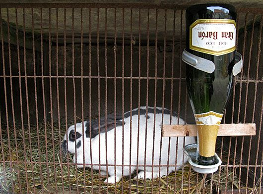 lapin-bouteille