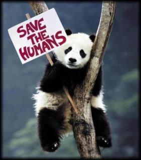 humain-panda.jpg