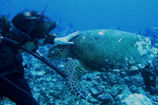 Plongée Moorea 14
