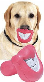 dog-smile-toy.jpg