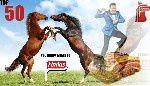 2013 findus-cheval-drole