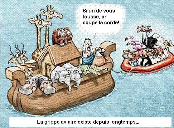 image-grippe-aviaire