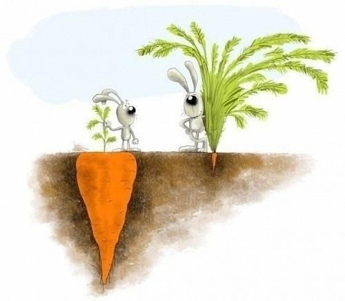 lapins-carottes--ne-pas-se-fier-aux-apparences.jpg