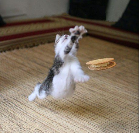 Cookies-chat-biscuit-saut.jpg