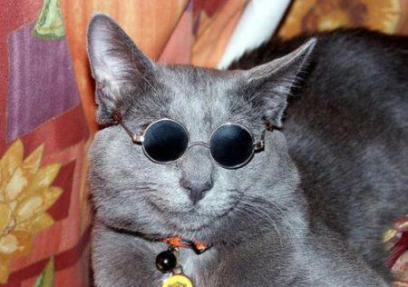 chat-a-lunettes-drole.jpg