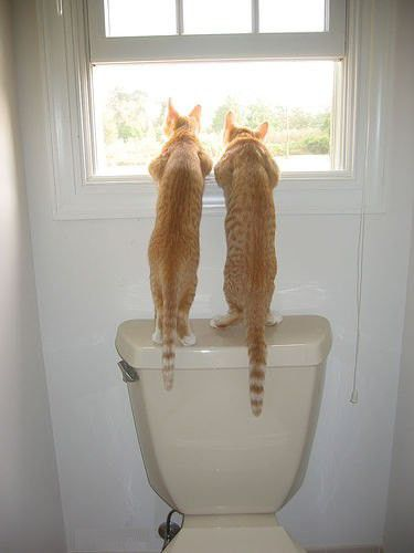 chat-wc-fenetre.jpg