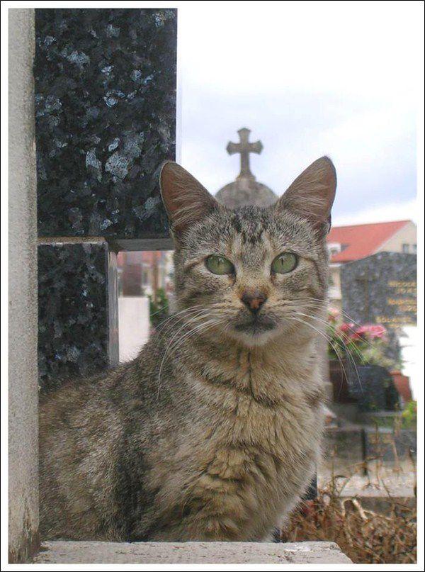 nouveau-pape-chat-francois-eglise-dome.jpg