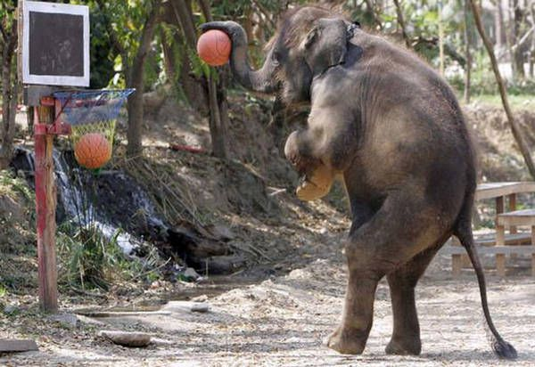 elephant-basketball.jpg