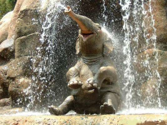 happy-elephant-douche.jpg
