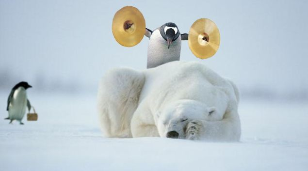 ours-pingouin-cymbale.jpg