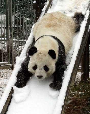 panda-toboggan.jpg