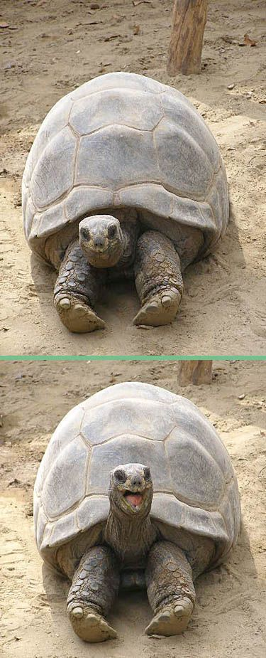 tortue-sourire-gag.jpg