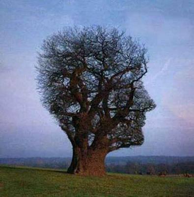 arbre illusion