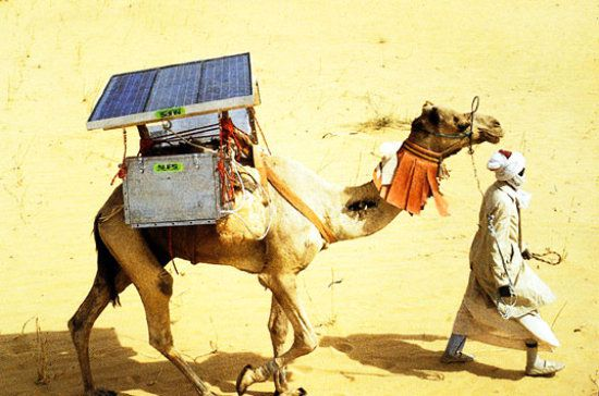 solar-powered-camel