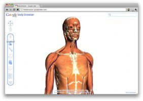 google-body-browser-francais.jpg