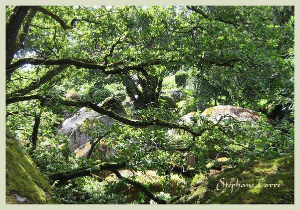 huelgoat-finistere-rocher-dans-branches-1.jpg