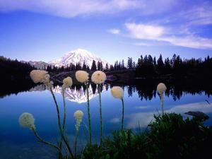 nature-fleur.jpg
