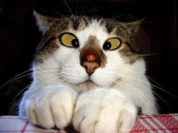 chat-qui-louche.jpg