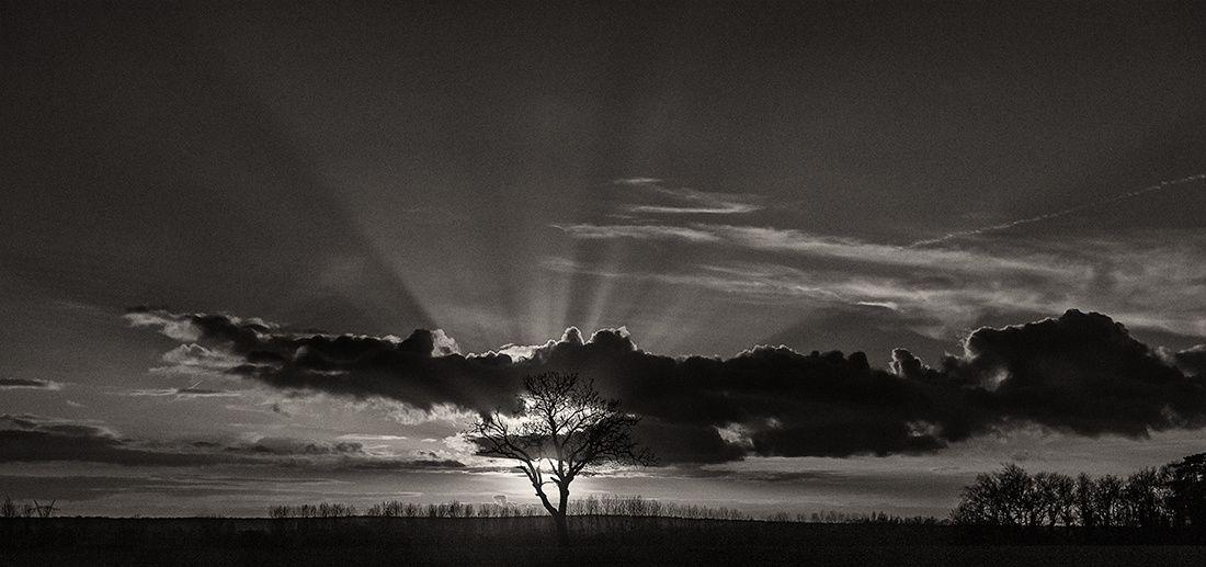 arbre-a-soleil--1100.jpg