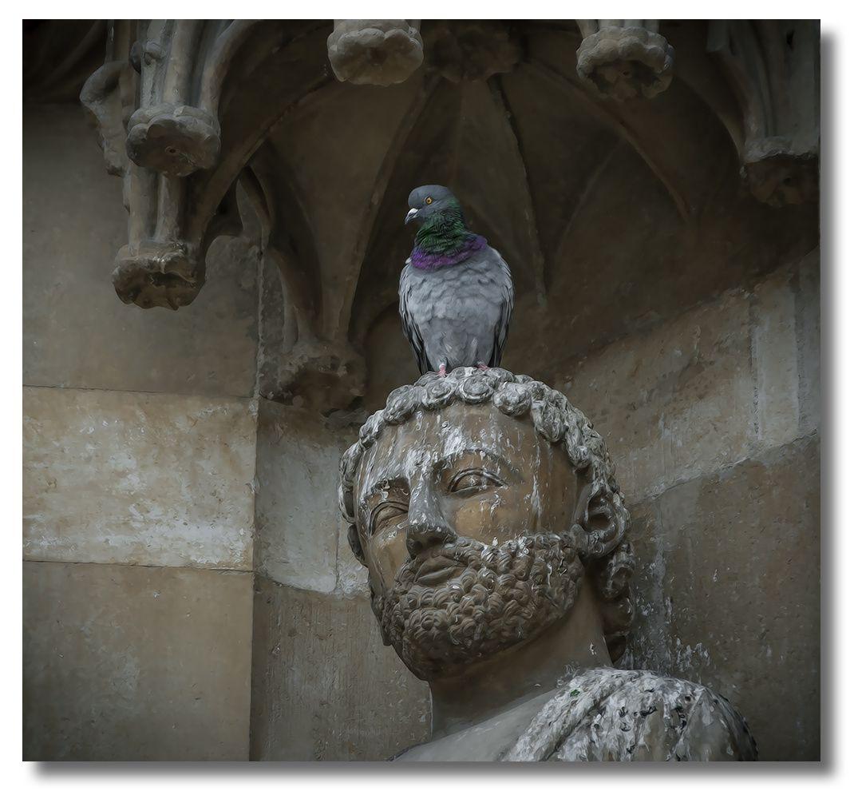 tete-et-pigeon-1100.jpg