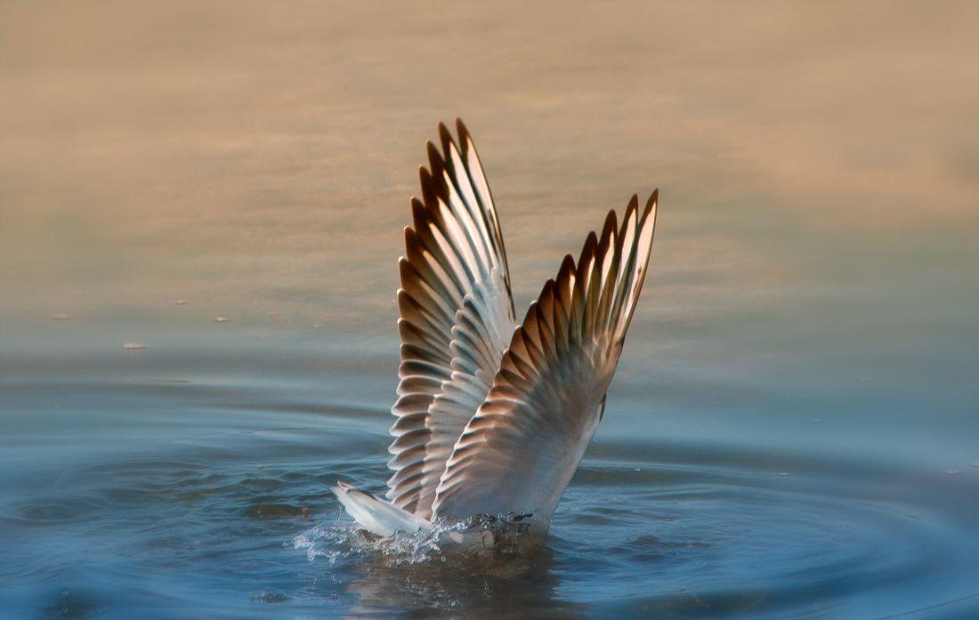 deux-ailes-1100.jpg