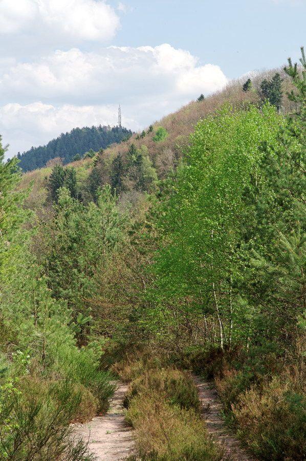 Montée à la Roche de Buémont et photographies sur Bruyères depuis le point de vue de la Roche de Buémont