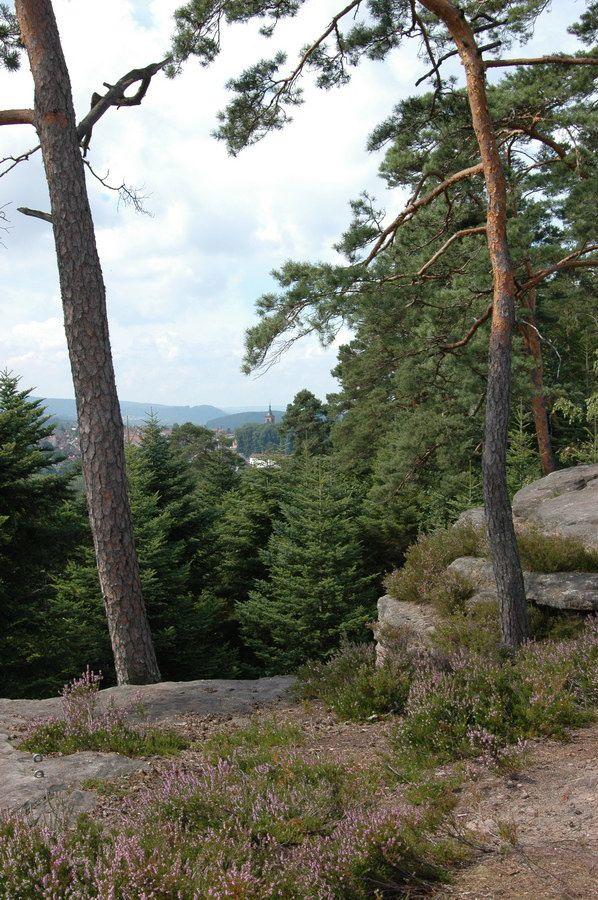 Photographies prises lors de la montée aux Roches de Pointhaie  et depuis le point de vue des Roches de Pointhaie sur Bruyères.