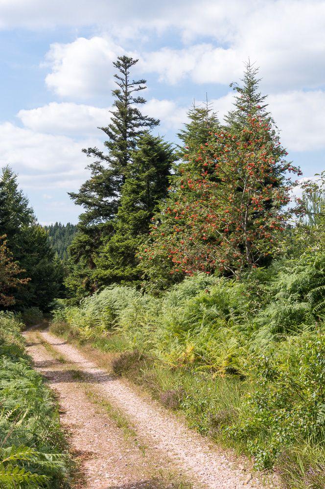 Découvrir une partie du Chemin de la Liberté de Bruyères à Biffontaine avec cette belle randonnée de Vanémont au Trapin des Saules en passant par la Roche du Corbeau, la Pierre de la Guillotine, retour par la route forestière de Noiregoutte