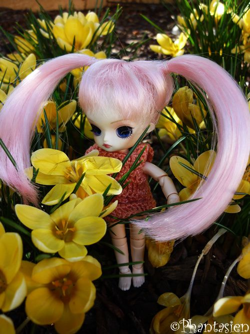 Voici ma collection de mini dolls : Little pullip, little Dal et Dollcena !