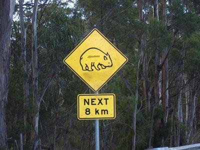 Faune Tasmanie 3806