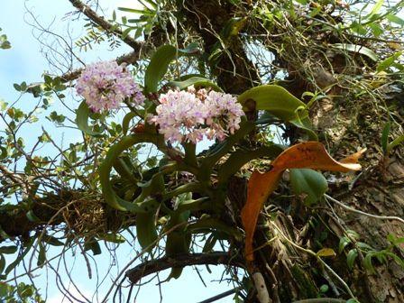 02-fevrier-orchidee-Hue.jpg