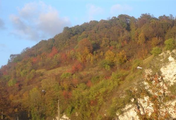 782----couleur-d-automne-15.jpg
