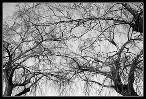 Branches-copie-1.jpg
