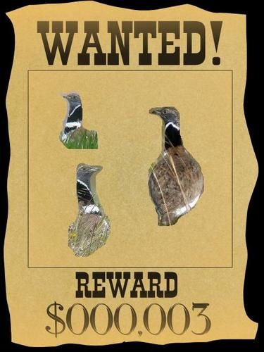 wanted-outarde.JPG