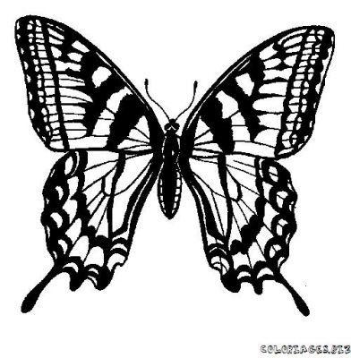 papillon08.jpg
