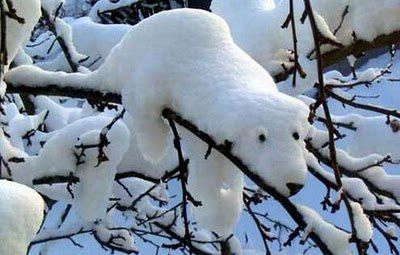 neige-ours--insolite.jpg
